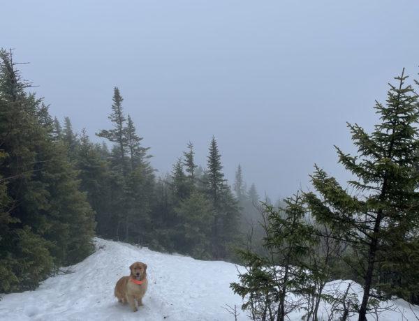 A dog on the trail, seen while hiking East Osceola in the White Mountains, New Hampshire