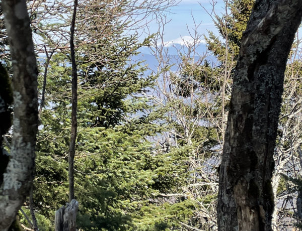 A peek of Mt. Washington, seen while hiking North and Middle Tripyramid Mts. in the White Mountains, New Hampshire